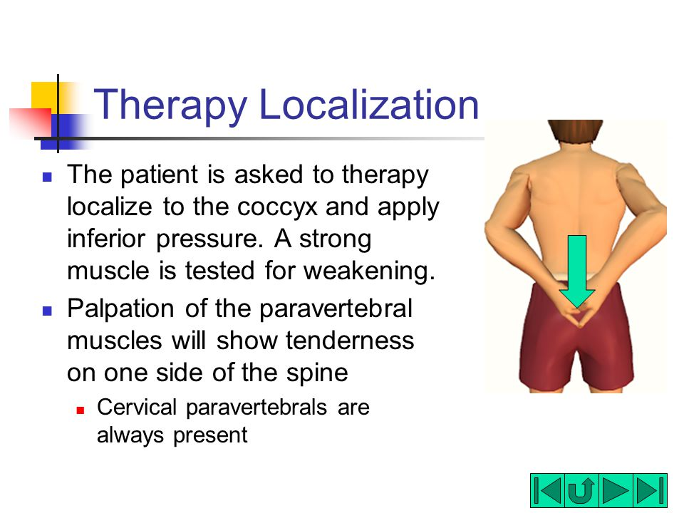 Meningeal Release  Coccyx  ppt video online download