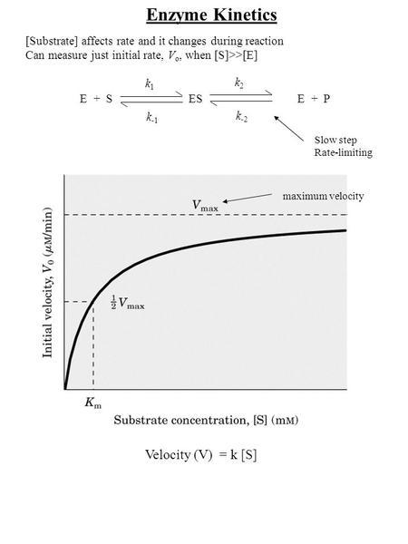 Kinetics of Enzyme Reactions Srbová Martina. E + S ES E