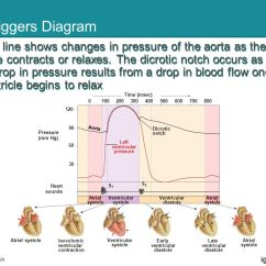 Heart Sounds Diagram Simple Wiring For Light Bar Cardiovascular Physiology - Ppt Video Online Download