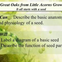 Lima Bean Dissection Diagram Gm Radio Theft Lock Seeds Monocotyledon Dicotyledon - Ppt Video Online Download