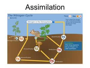 Nitrogen Cycle url:  ppt video online download