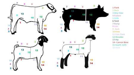 Objectives To identify the external anatomy of livestock
