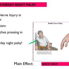Radial Nerve Diagram 2008 Kia Spectra Ex Wiring Windsor University School Of Medicine St.kitts - Ppt Video Online Download