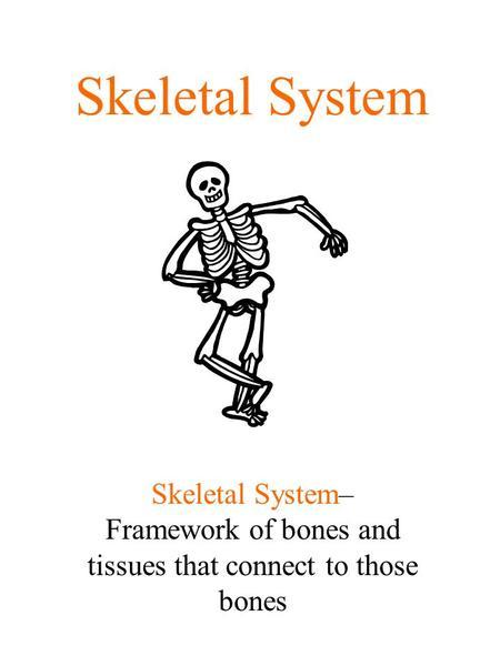 THE SKELETAL SYSTEM Chapter 24 B. Skeletal System Stats