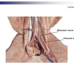 Pancreas Anatomy Diagram 2005 Dodge Neon Starter Wiring Cat Dissection Muscular Labs. - Ppt Video Online Download