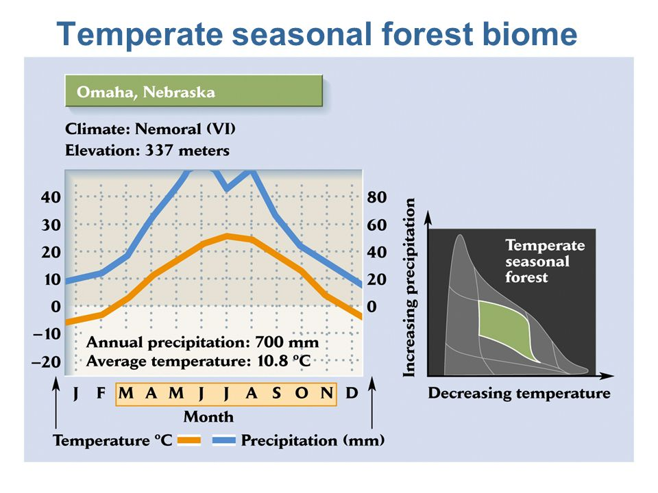 deciduous forest diagram triumph wiring terrestrial biomes of the world lecture topics: - ppt video online download