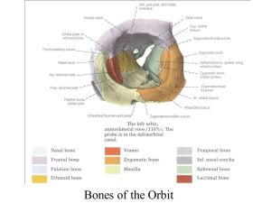 Overview of Structure of the Adult Skull  ppt download