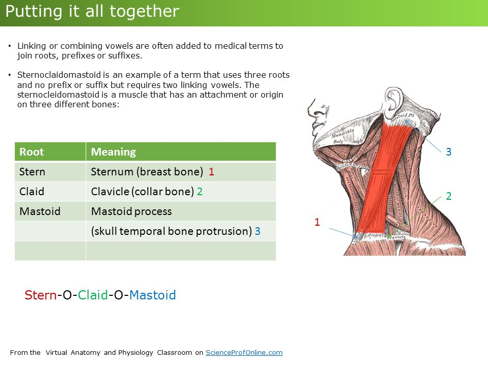 Decoding Medical Terminology Ppt Download