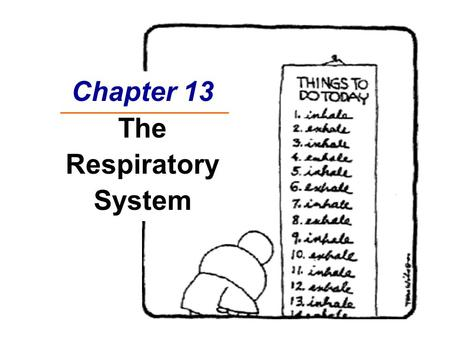 November 22, 2011 Lung diseases. Respiration system