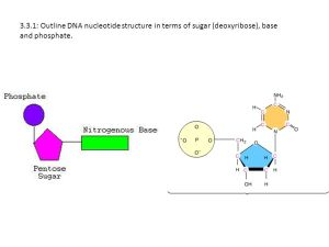 33:DNA Structure  ppt video online download