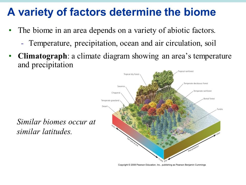 kelp forest diagram polaris rzr wiring chapter 5 species interactions and community ecology - ppt video online download
