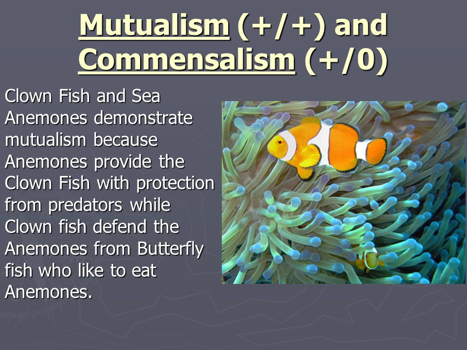 Chapter 5 Evolution And Community Ecology Ppt Video