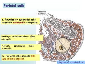 Department of Histology and Embryology  ppt video online