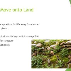Structure Of Stomata With Diagram Toyota Hilux Wiring Plant Evolution & Roots - Ppt Video Online Download