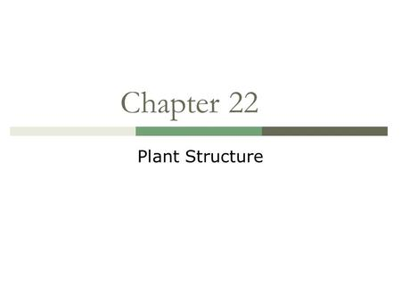 Lecture 4 Plant Tissues and Bodiversity. Plant organs: A