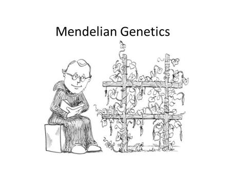 Mendel and Heredity Chapter 10 and ppt download