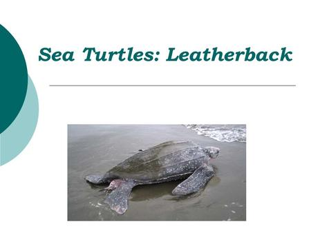 venn diagram of reptiles and amphibians 1999 gmc sierra 1500 wiring do now #2 create a comparing & contrasting sea turtles to land turtle ...
