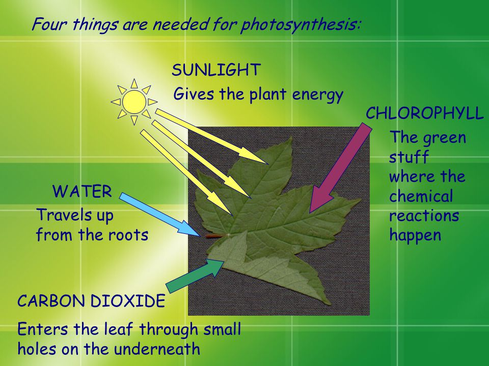 Photosynthesis is the process a plant uses to make food and grow  ppt video online download