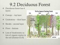 Earth Floor Biomes Deciduous Forest - Carpet Vidalondon