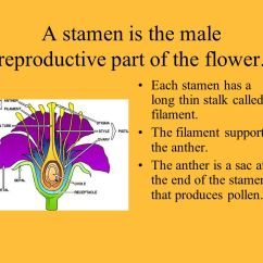Flower Parts Diagram Redman Mobile Home Wiring Structure And Function - Ppt Video Online Download