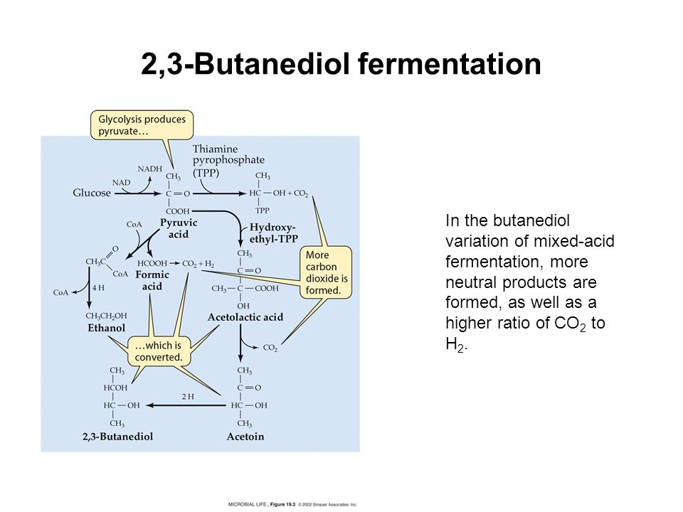 Mixed Acid Fermentation
