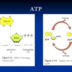 Glycolysis And Krebs Cycle Diagram Hdmi To Bose A Good Cellular Respiration Animation! - Ppt Video Online Download