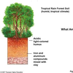 Diagram Of A Tropical Forest Network Software Microsoft Soil Orders Here We Go!. - Ppt Download