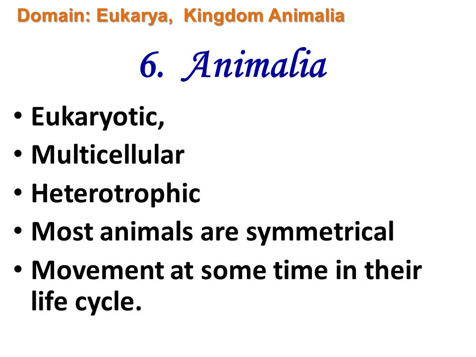 Classification: Chapter 17 Taxonomy 6 Kingdoms Dissection