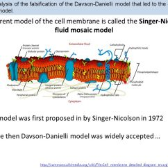 Diagram Of Fluid Mosaic Model Cell Membrane Pourbaix Explained 1.3 Structure Essential Idea: The Biological Membranes Makes Them ...