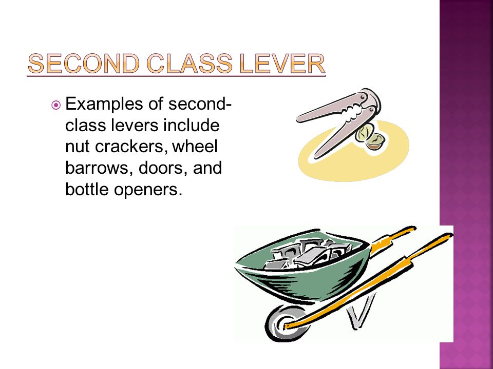 Enchanting 1st Class Lever Photos Anatomy And Physiology Biology