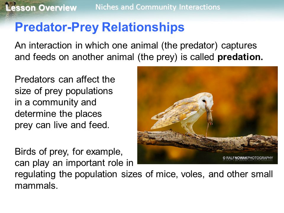 4 2 Niches And Community Interactions Ppt Video Online