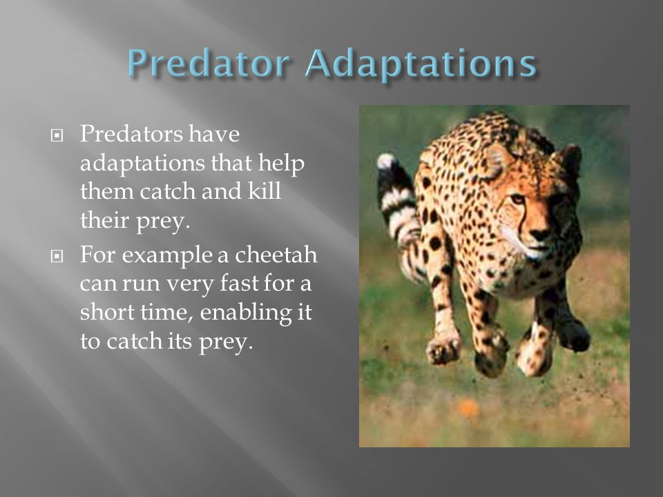 Ecological Interactions Ppt Video Online Download
