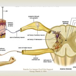 Parts Of The Nose Diagram Usb Cable Wire Rancho Los Amigos Post-polio Support Group, March 22, Ppt Video Online Download
