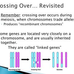 6 Chromosomes Crossing Over Diagram Wiring For Tow Bar Electrics Mendel And Genetics Chapter Ppt Video Online Download