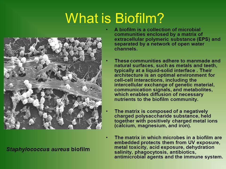 immune system diagram alpine head unit wiring bacteria, biofilm, and bio-pesticide bt (bacillus thuringiensis) - ppt download