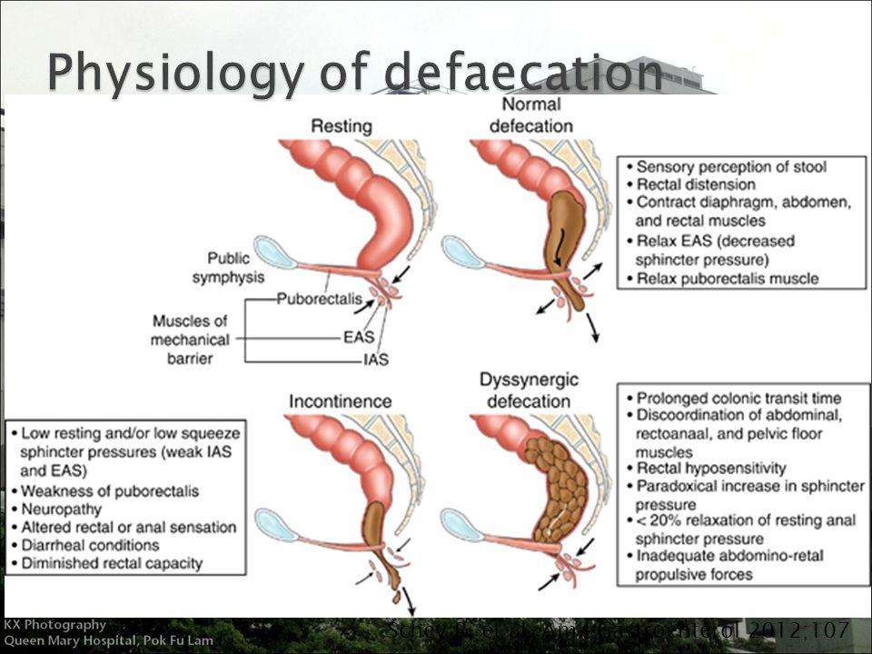 sympathetic and parasympathetic diagram back to stem leaf pelvic floor disorder affecting defaecation - ppt video online download
