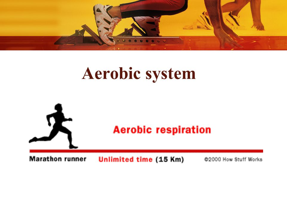 Effect Of Muscular Exercise On Body Metabolism Ppt Video