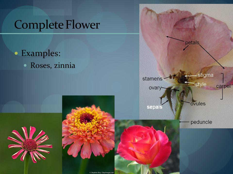 FLOWERS By Chelsye DeBoor Ppt Video Online Download
