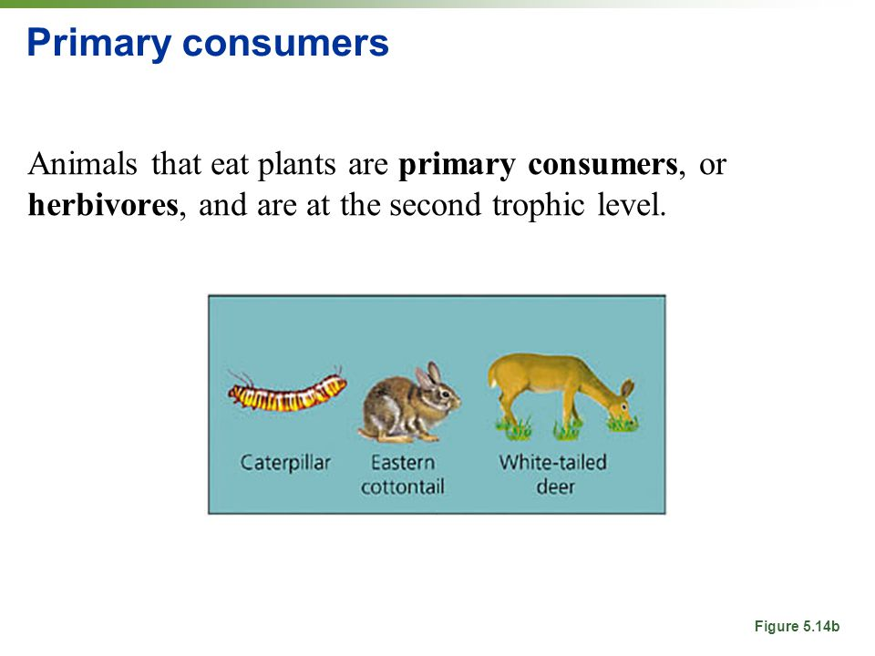 deciduous forest food web diagram 2006 cobalt radio wiring ecology and evolution: populations, communities, biodiversity - ppt download