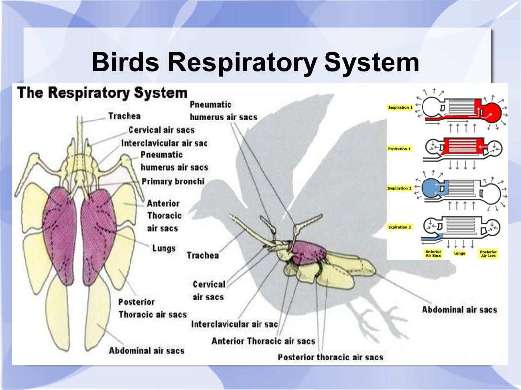 bird of internal organ diagram the lightning thief plot visio wiring and excel circuit maker