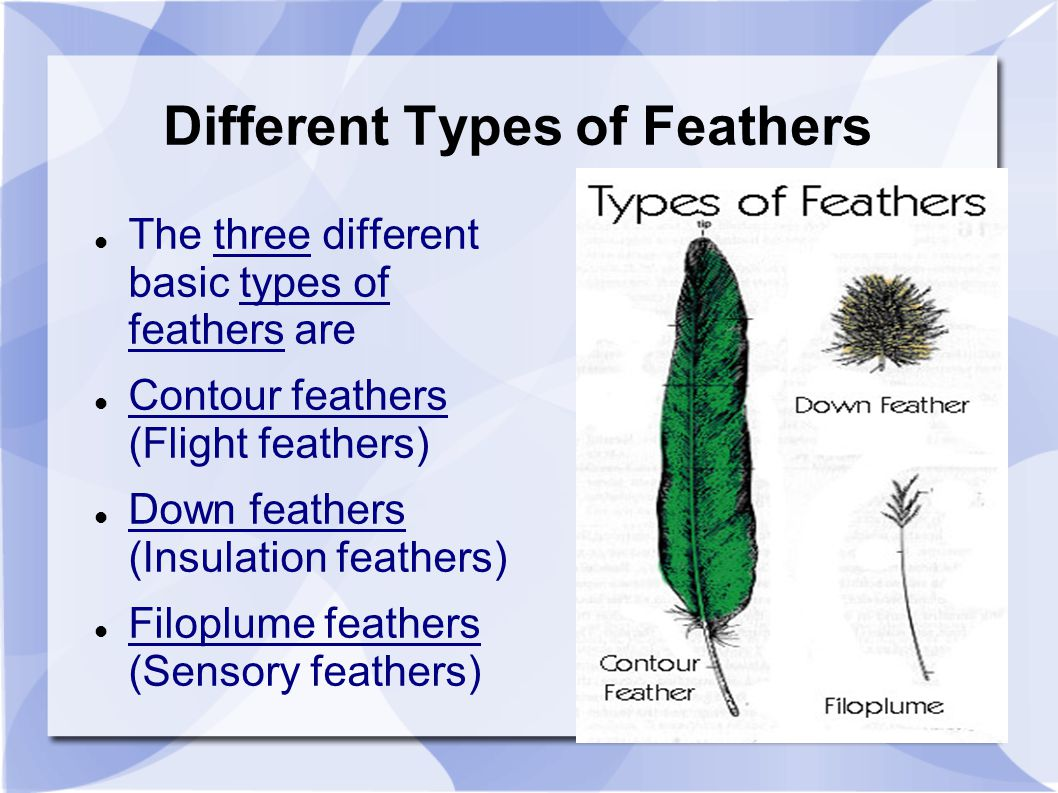 diagram types of feathers ford f550 wiring different bird pictures to pin on