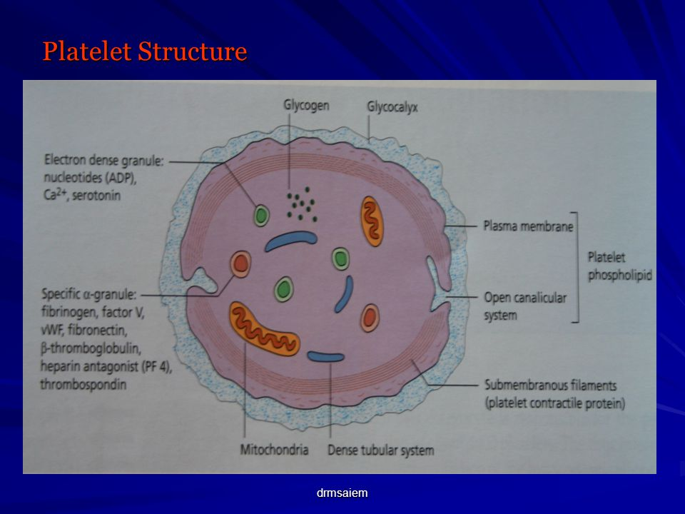 cell membrane diagram experimental design chart platelets objectives production platelet structure - ppt video online download