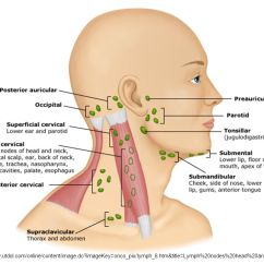 Where Are My Lymph Nodes Diagram Mitsubishi Lancer Alternator Wiring Head And Neck, Eyes, Ears, Nose, & Throat - Ppt Video Online Download