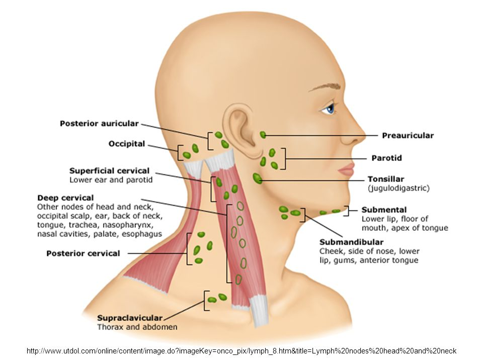where are my lymph nodes diagram jcb wiring 3cx head and neck, eyes, ears, nose, & throat - ppt video online download