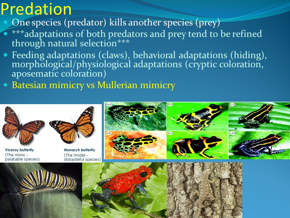 Ch 50 54 Ecology Study Of Interactions Between Organisms