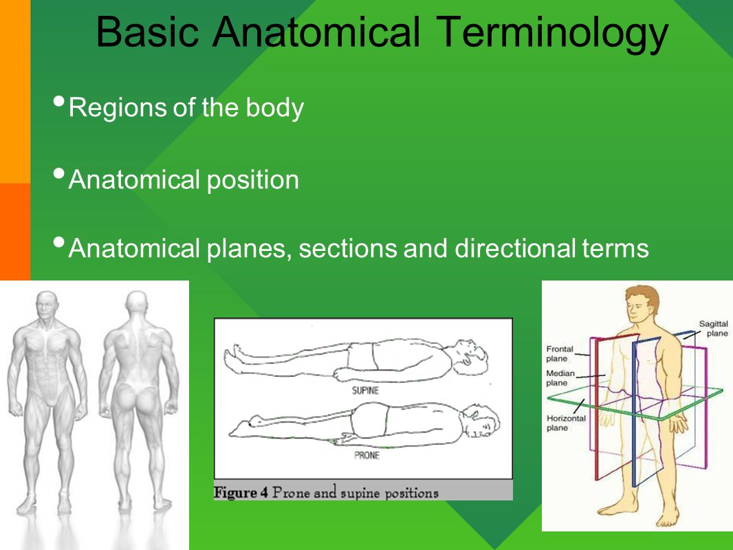 Introduction To Anatomy Amp Physiology