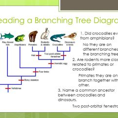 Branches Branching Tree Diagram Voyager Trailer Brake Controller Wiring Change Over Time 7.3 Biological Evolution Accounts For The Diversity Of Species Developed ...