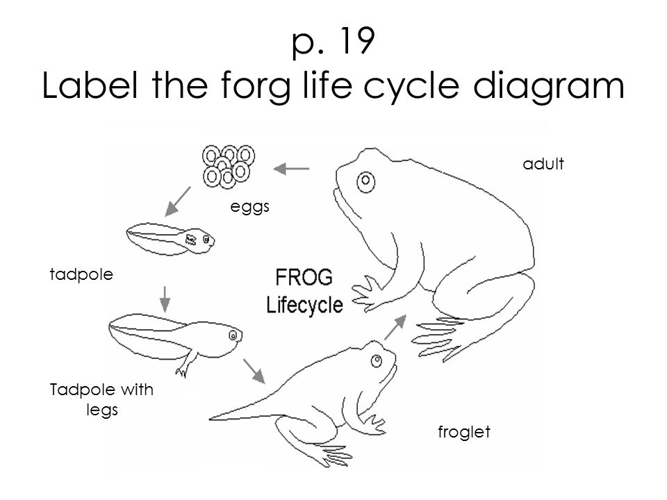 Describe The Water Cycle With The Aid Of Labeled Diagram