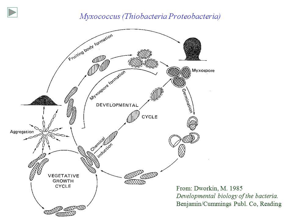 Survey of bacteria Bacteria: Planctobacteria Cyanobacteria
