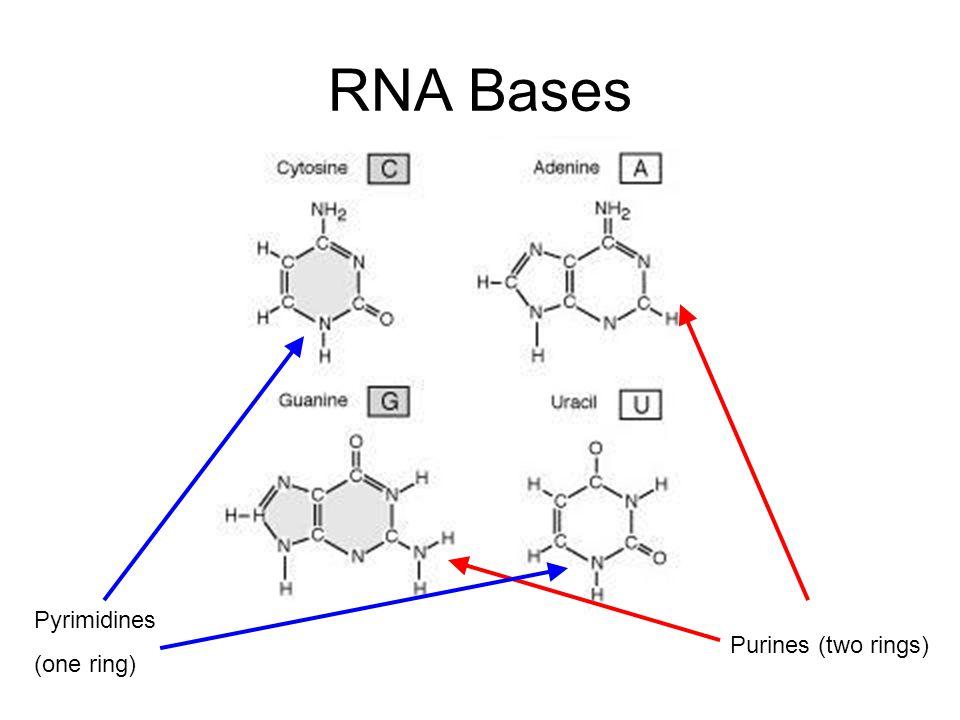 Andrew Hendriks CMPT 889 Selected Topics in Bioinformatics
